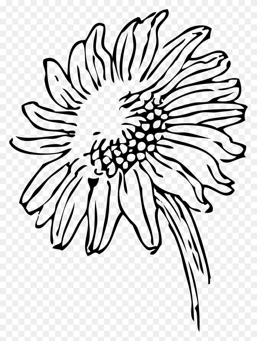 Black And White Sunflower Clipart - Sunflower Images Clip Art