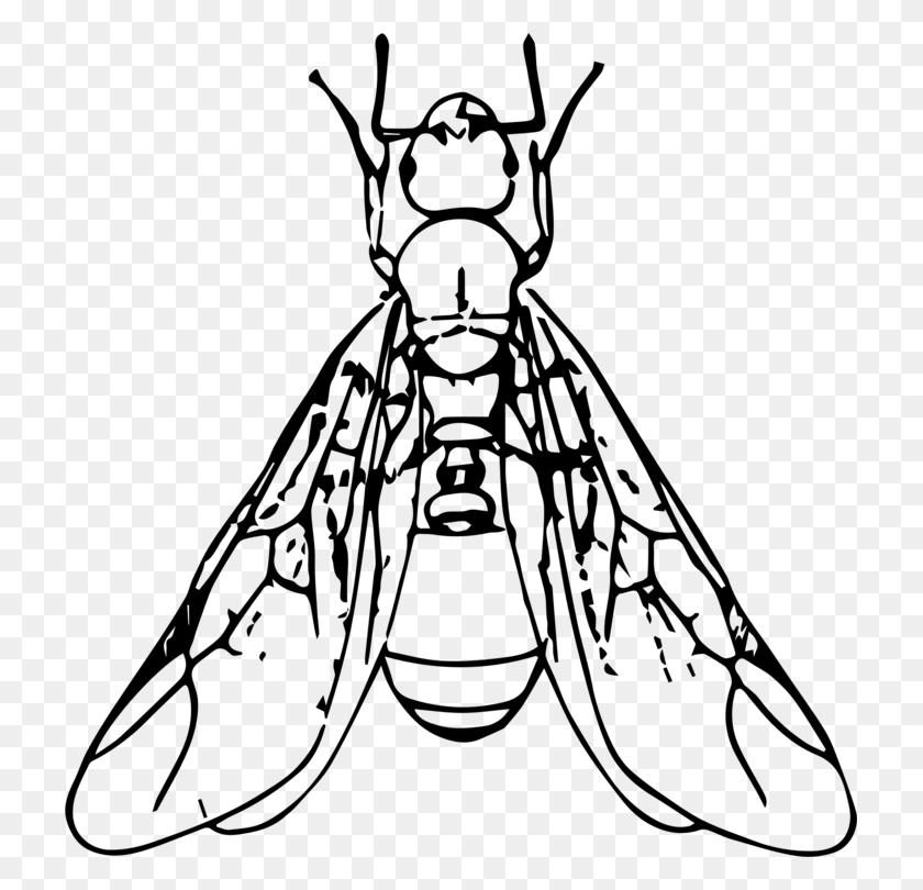 Black Carpenter Ant Beetle Termite Drawing - Termite Clipart