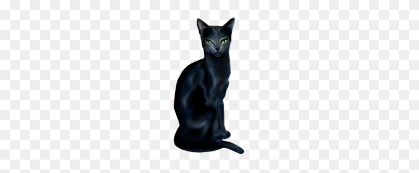 Black Cat - Black Cat PNG