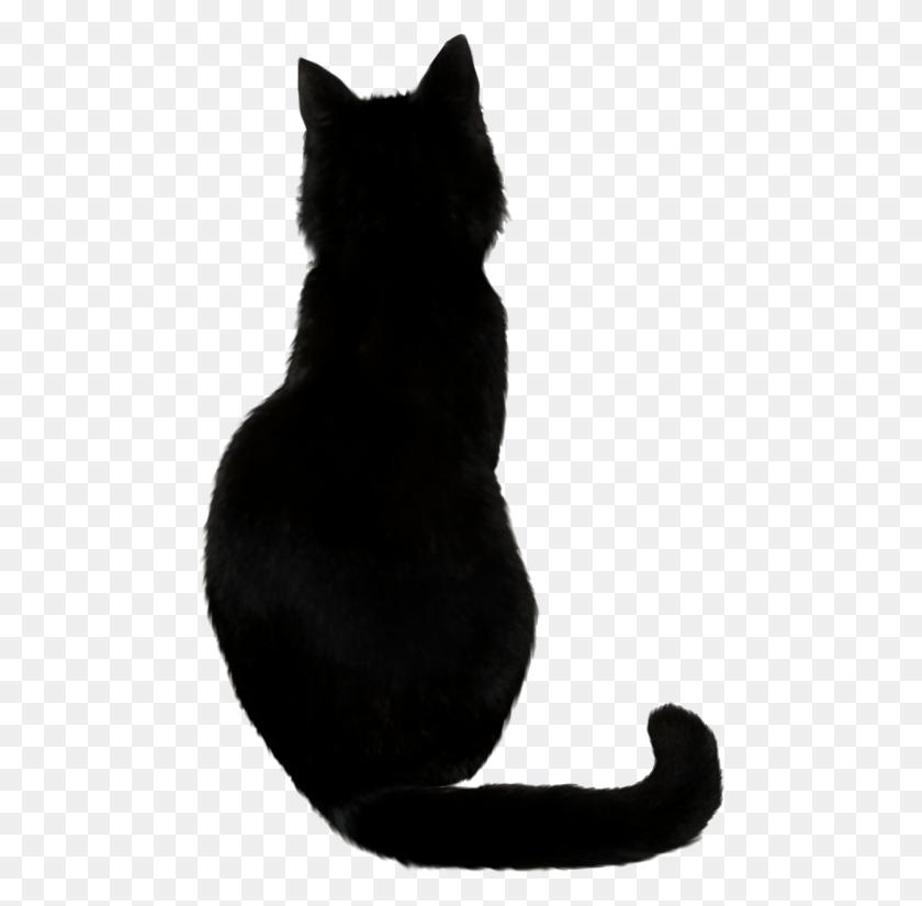 Black Cat Png - Black Cat PNG