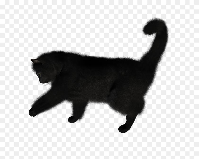 Black Cat Png Cliprt - Black Cat PNG