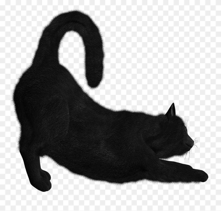 Black Cat Png Image - Black Cat PNG