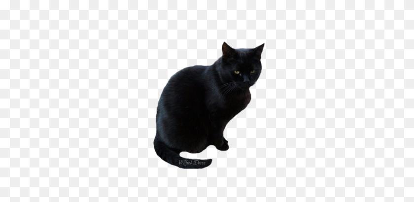Black Cat Transparent Png Pictures - Black Cat PNG