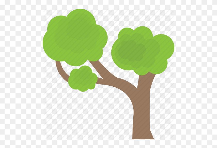 Bonsai Tree, Decorative Tree, Grafting, Small Trees, Umbrella Tree - Bonsai Tree PNG