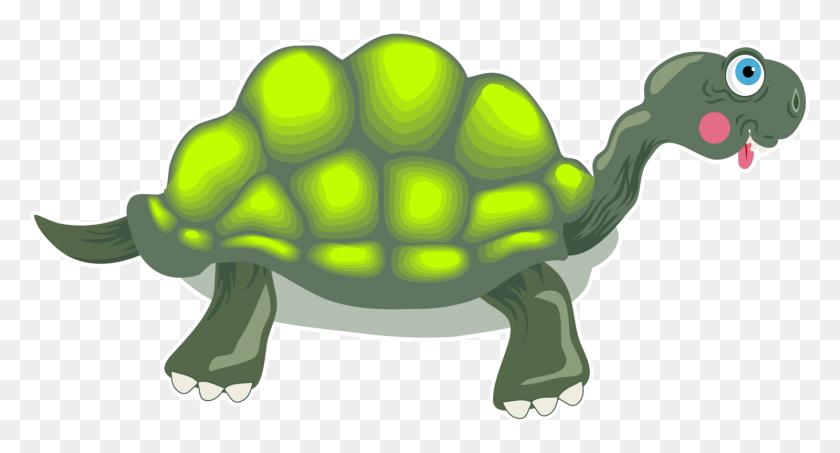 Box Turtles Tortoise Reptile Sea Turtle - Sea Turtle PNG
