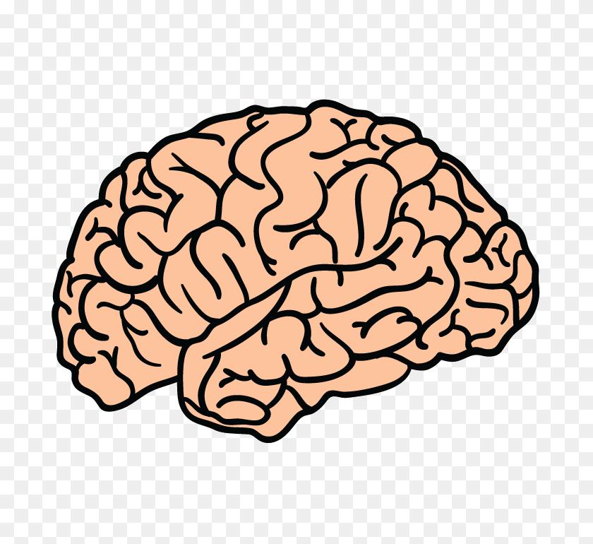 Brain Png Transparent Brain Images - Brain PNG