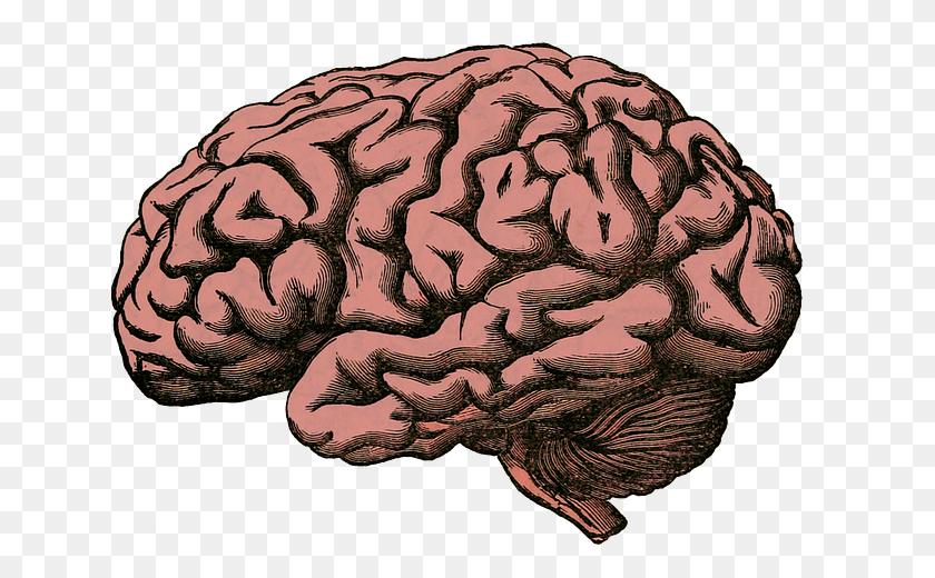 Brain Png Transparent Images Free Download Clip Art - Brain Clipart Transparent