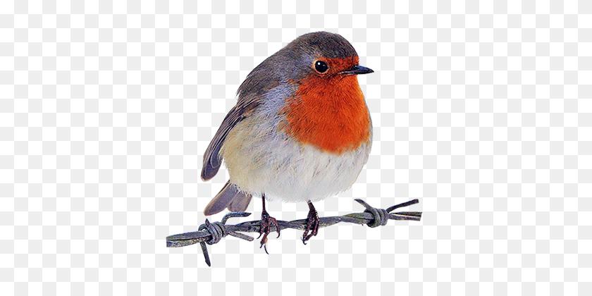 Brds Clipart Robin - Robin Superhero Clipart
