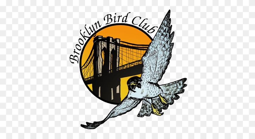Brooklyn Bird Club Celebrating Years! - Peregrine Falcon Clipart