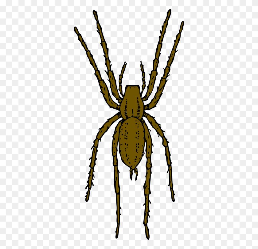359x749 Brown Recluse Spider Widow Spiders Arthropod House Spider Free - Tarantula Clipart