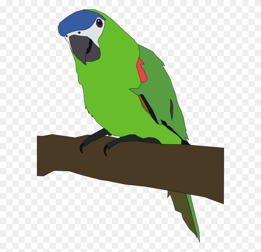 602x750 Budgerigar Lovebird Macaw Parrots Download - Parakeet Clipart