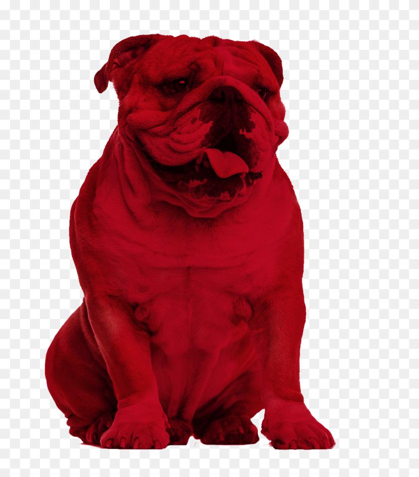 Bulldog Creative Services - Bulldog PNG