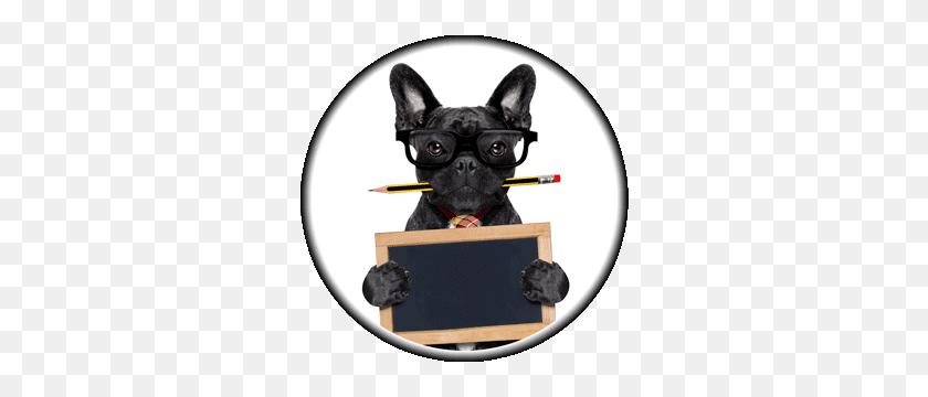 Bulldog Png - Bulldog PNG