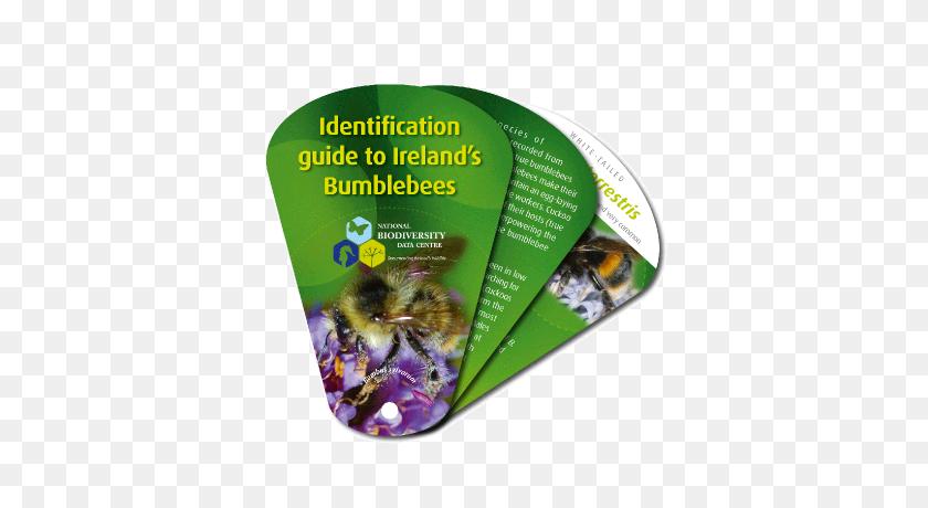 Bumblebee Swatch - Bumblebee PNG