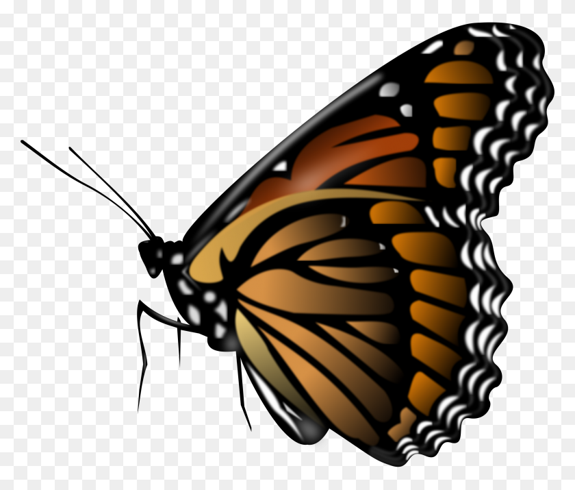 Butterfly Hd Png Transparent Butterfly Hd Images - PNG Images