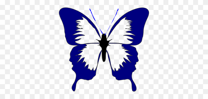 Butterfly, Insect, Spring Blue Butterfly Butterfly - Butterfly Clipart Black And White Outline