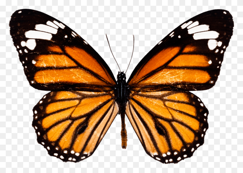 Butterfly Png Transparent Free Vector Vector Clipart Butterfly Png Stunning Free Transparent Png Clipart Images Free Download