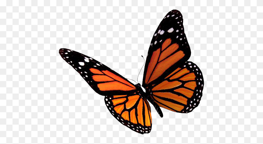Butterfly Transparent Png Pictures - Butterfly Clipart Transparent