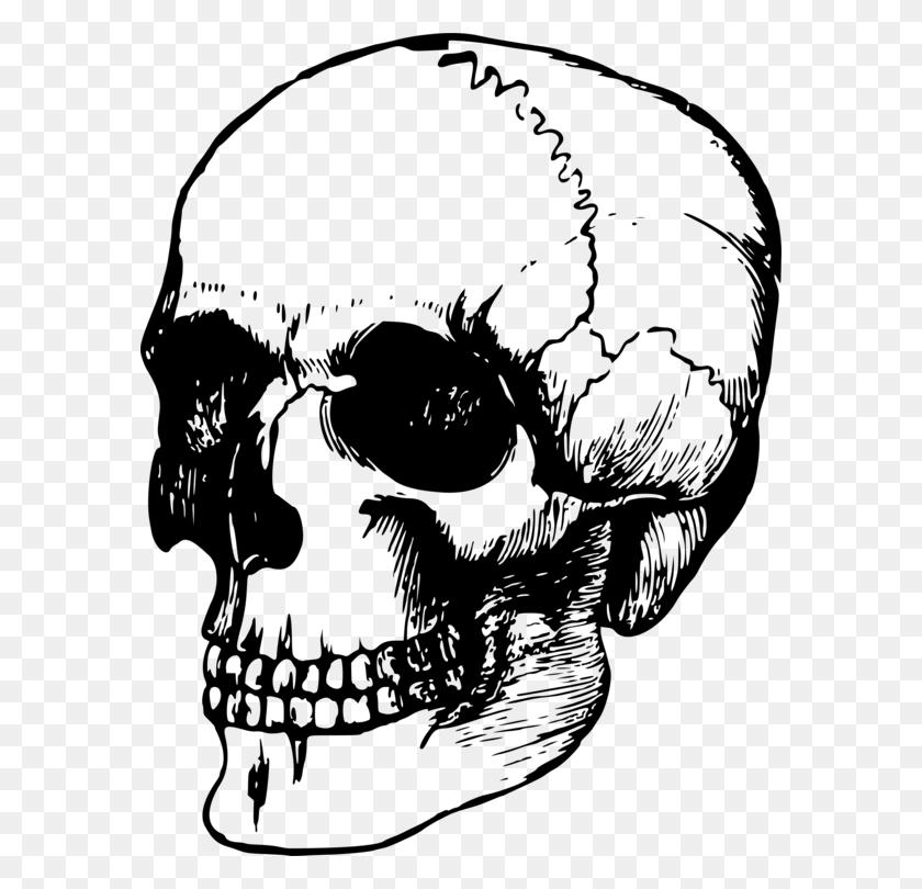 Calavera Human Skull Symbolism Art Human Skeleton - Skeleton Black And White Clipart