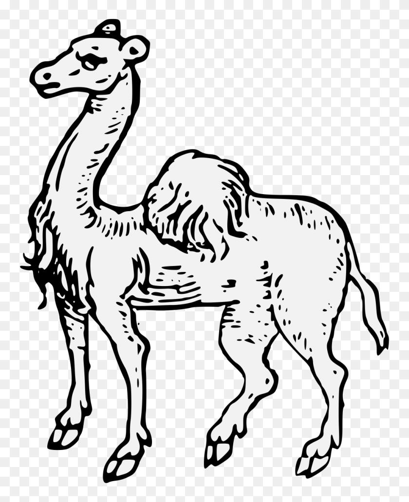 Camel - find and download best transparent png clipart