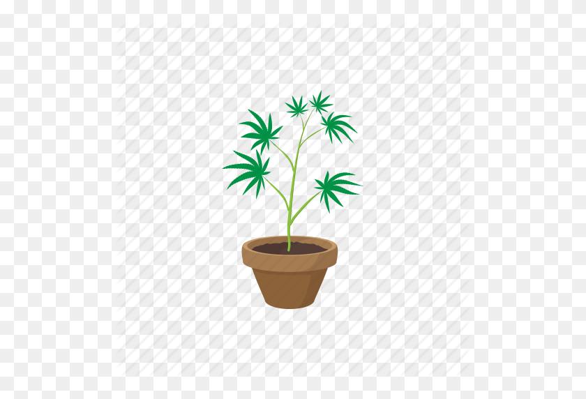 512x512 Cannabis, Drug, Green, Growing, Marijuana, Plant, Pot Icon - Marijuana Plant PNG