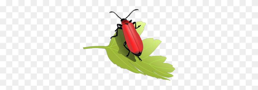 Cardinal Beetle - Red Cardinal Clipart