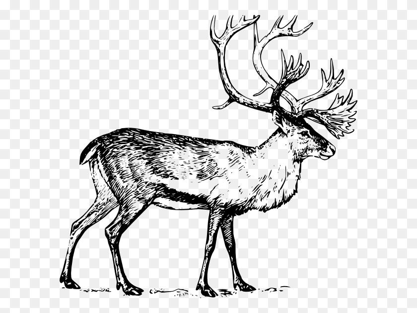 Caribou Clipart Clip Art - Elk Clipart