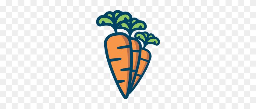 Zanahoria Png & Free Zanahoria.png Transparent Images #36915 - PNGio
