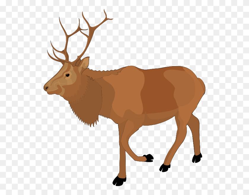 546x598 Cartoon Cliparts - Moose Head Clipart