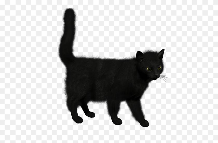 Cat Png - Black Cat PNG