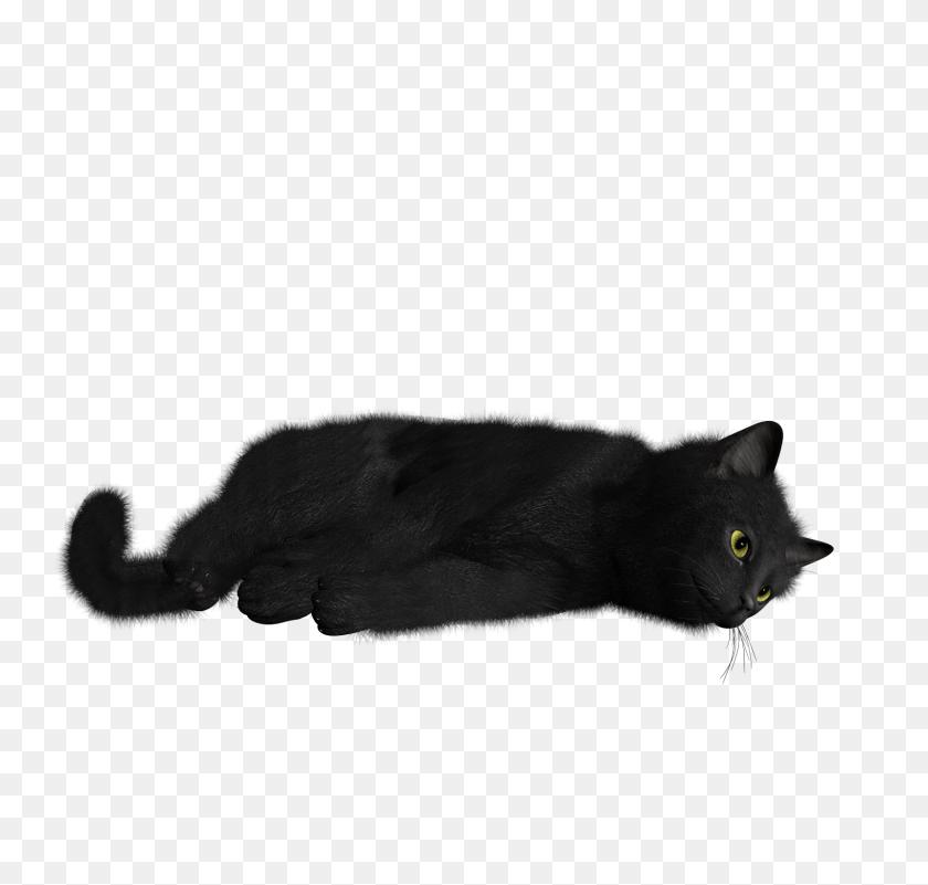 Cat Png Image - Black Cat PNG
