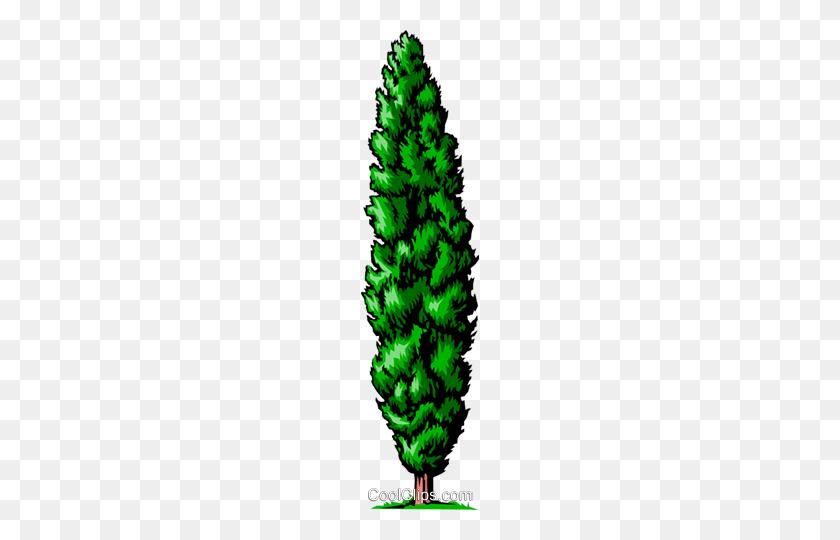 Cedar Tree Royalty Free Vector Clip Art Illustration - Cedar Tree Clipart