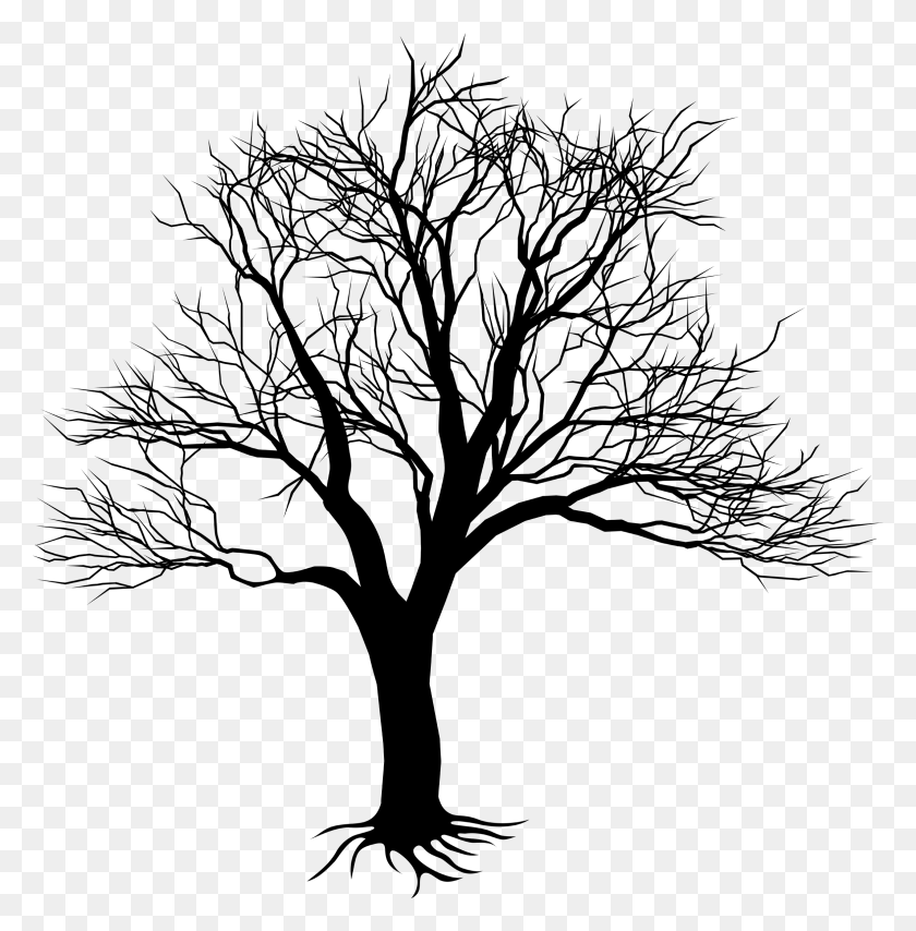 Cherry Blossom Tree Drawing Bare Cherry Blossom Tree Png Stunning Free Transparent Png Clipart Images Free Download