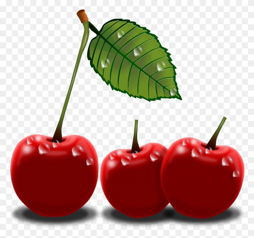 Cherry Plants Clip Art Image - Plants Clipart