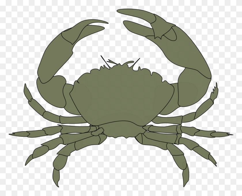 Chesapeake Blue Crab Crab Meat Aquatic Animal Dungeness Crab Free - Blue Crab Clip Art
