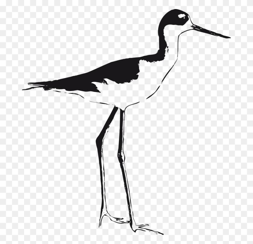 Christian Clip Art Black Winged Stilt Shorebirds - White Bird Clipart