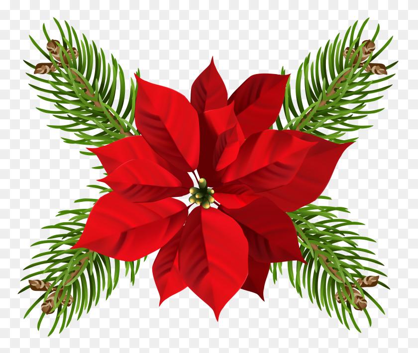 Christmas Poinsettia Transparent Png Clip Gallery - Poinsettia Clip Art