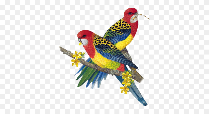 Clip Art Graphics - Tropical Bird Clipart