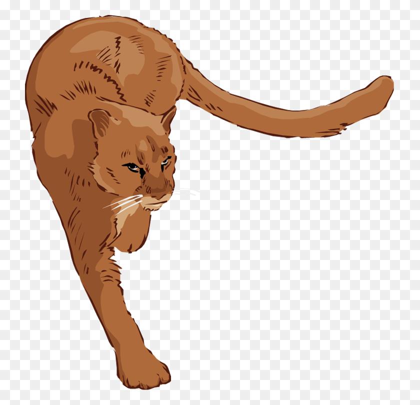 Clip Art Lion - Circus Lion Clipart