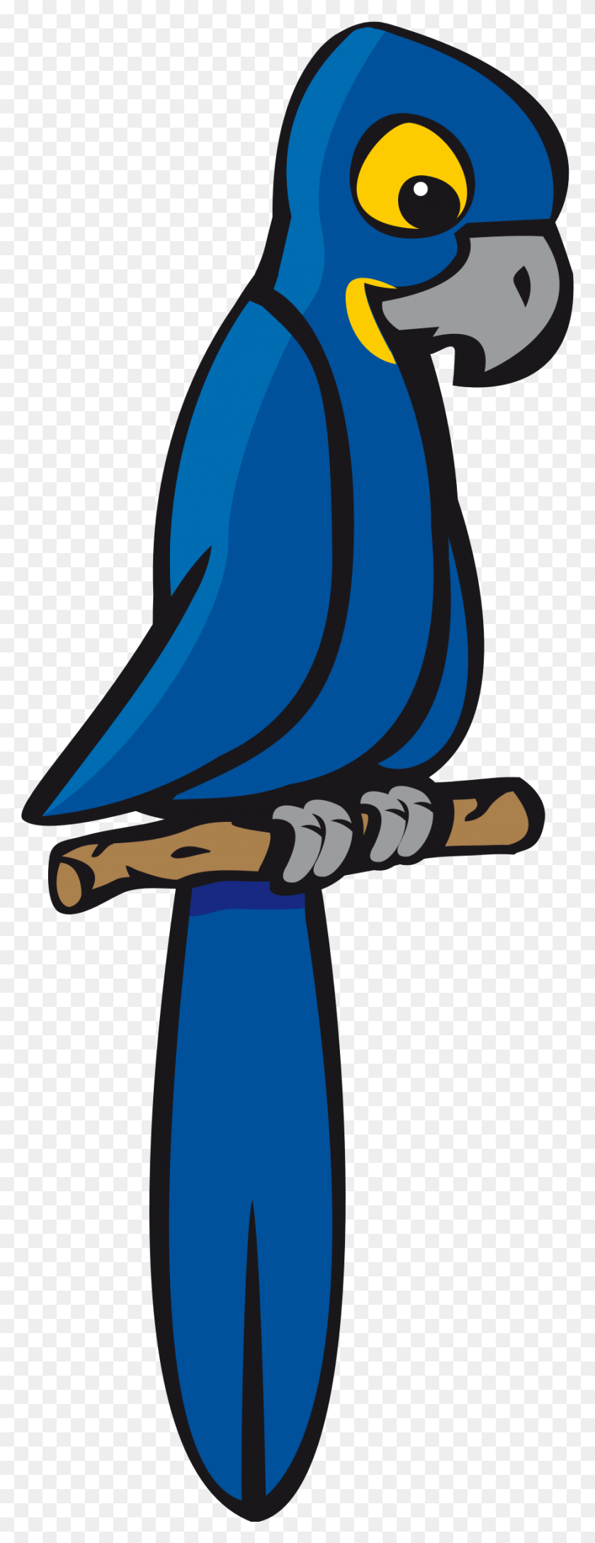 884x2399 Clipart - Macaw Clipart