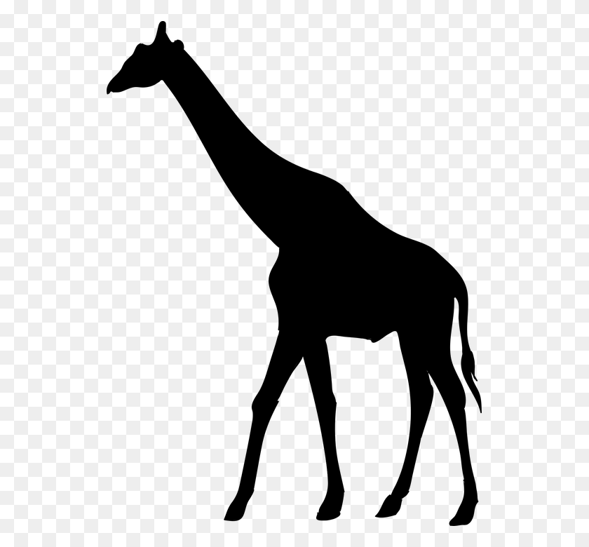 Clipart Giraffe Silhouette Clip Art Giraffe Silhouette Giraffe - Pixabay Clipart