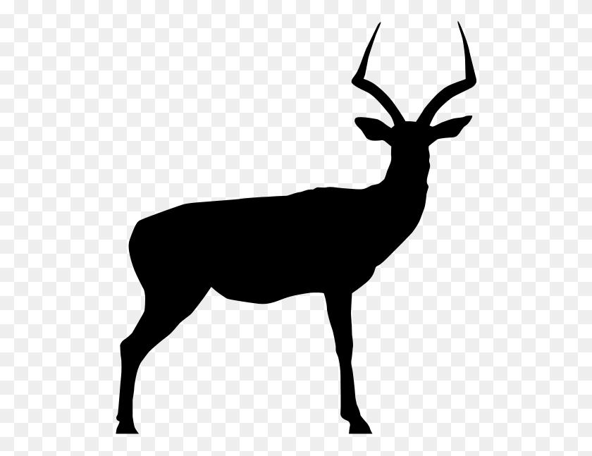 Clipart Resolution - Elk Clipart