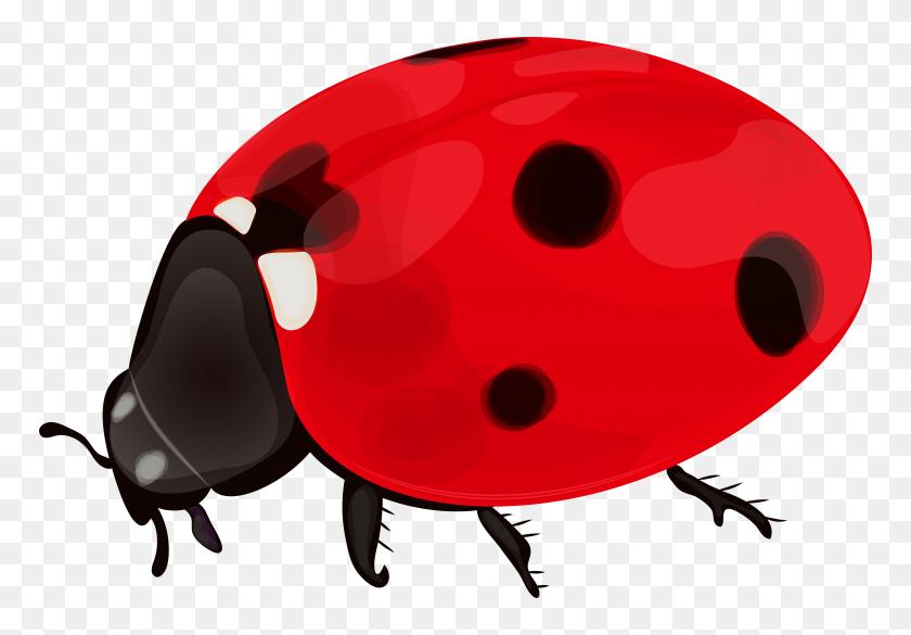 Clipart Spring Ladybug, Clipart Spring Ladybug Transparent Free - Spring Clipart Transparent