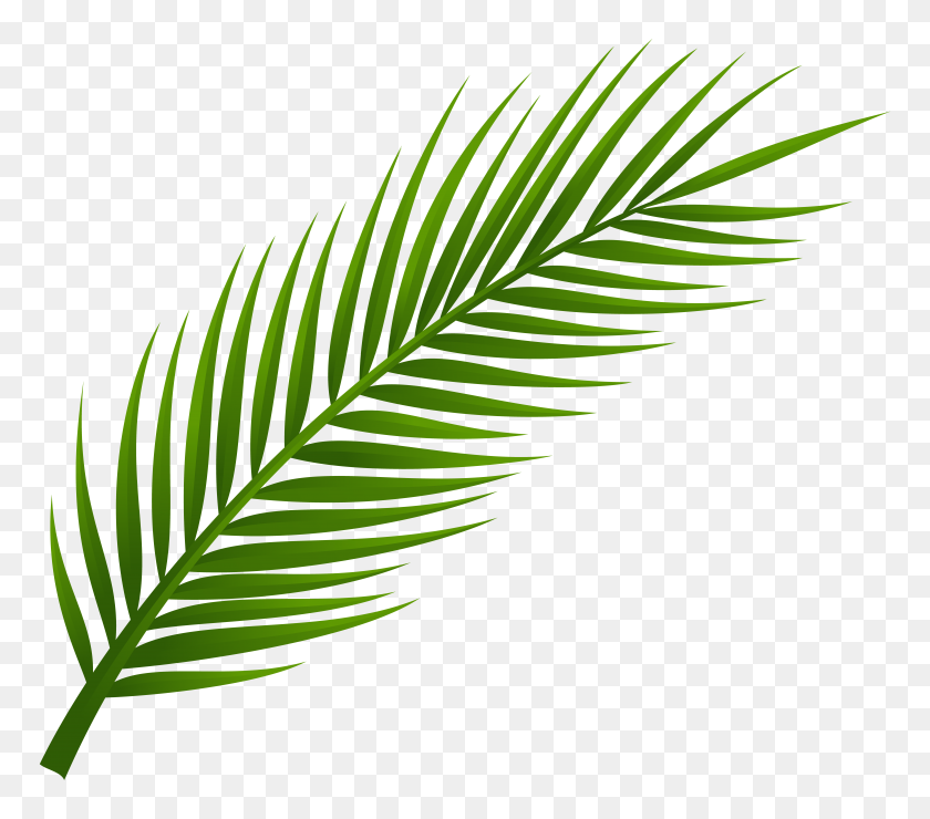 Png Coconut Tree Transparent Coconut Tree Images Palm Tree With