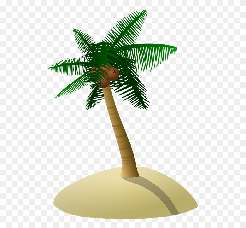 Coconut Tree Transparent Png Pictures - Tropical Trees PNG