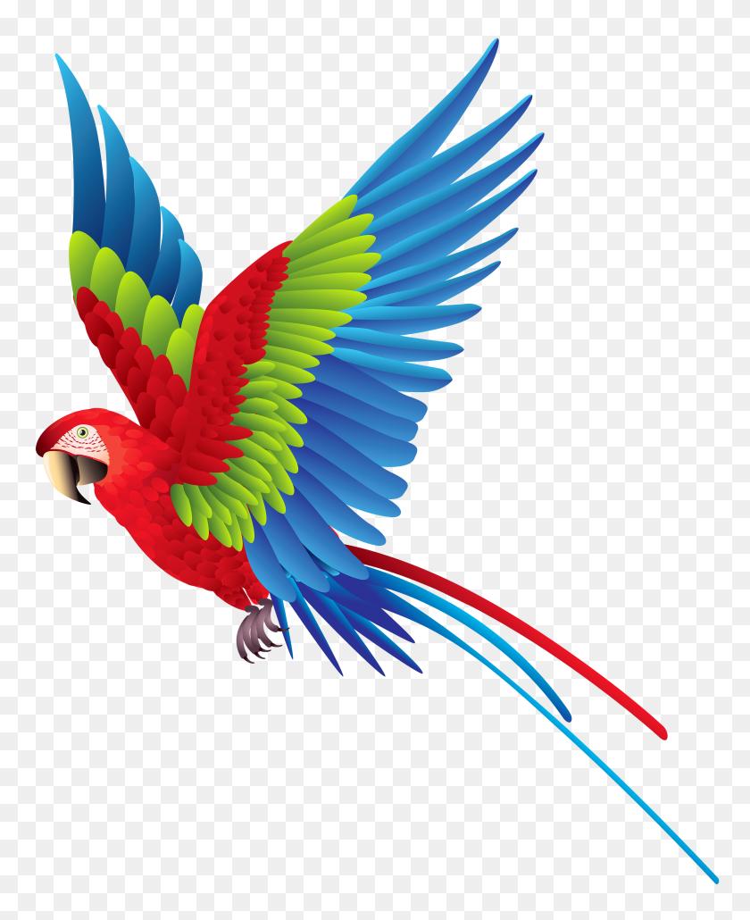 3214x4000 Colourful Parrot Png Clipart - Parrot Clipart