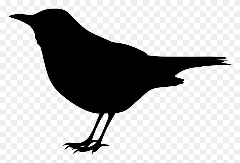 Common Blackbird Png Images Transparent Free Download - Bird Clipart Transparent Background