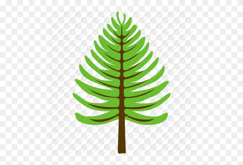 Coniferous Tree, Fir Tree, Nature, Pine Tree, Poplar Tree Icon - Topiary PNG