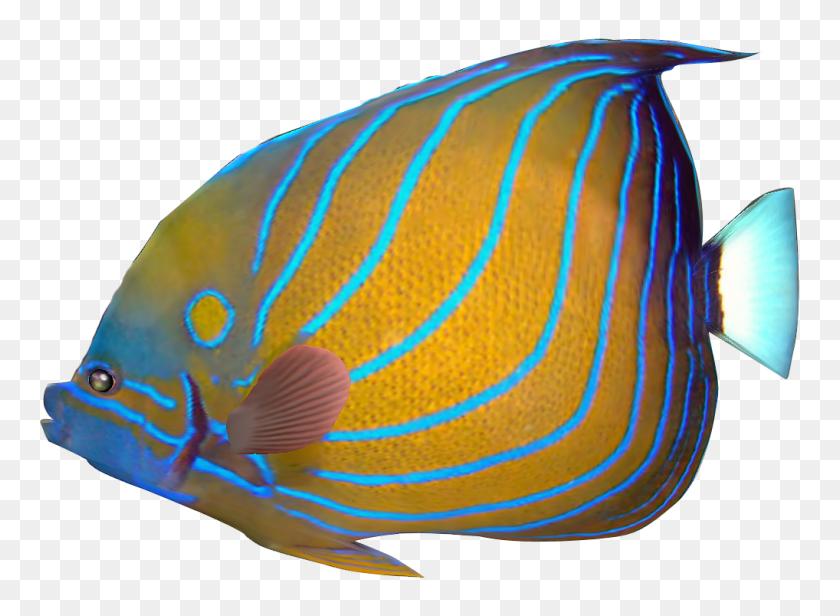 1018x726 Coral Clipart Pet Fish - Free Fish Clipart