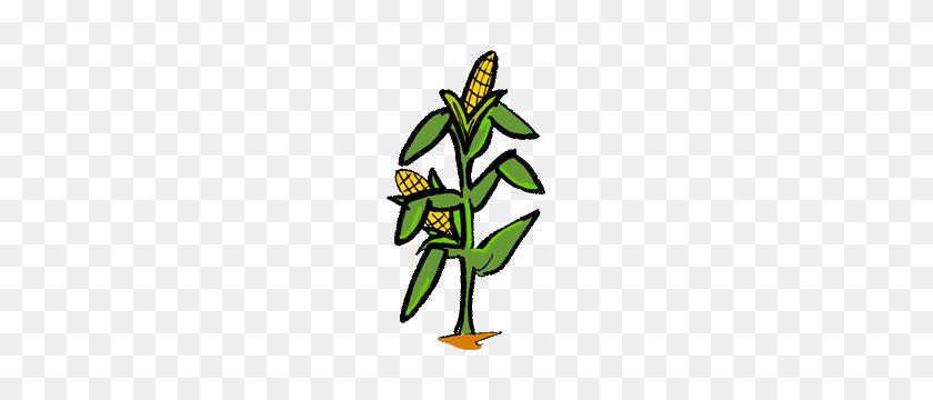 Corn Clipart Feild - Field Trip Clipart